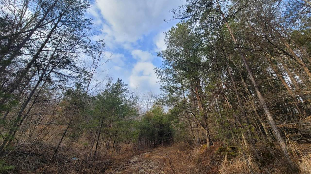 771 Wynn Hollow Road - Photo 1