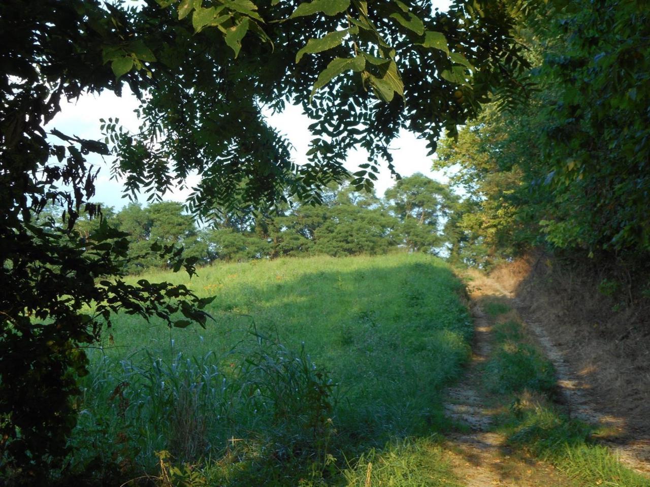 1210 Pea Ridge Road - Photo 1