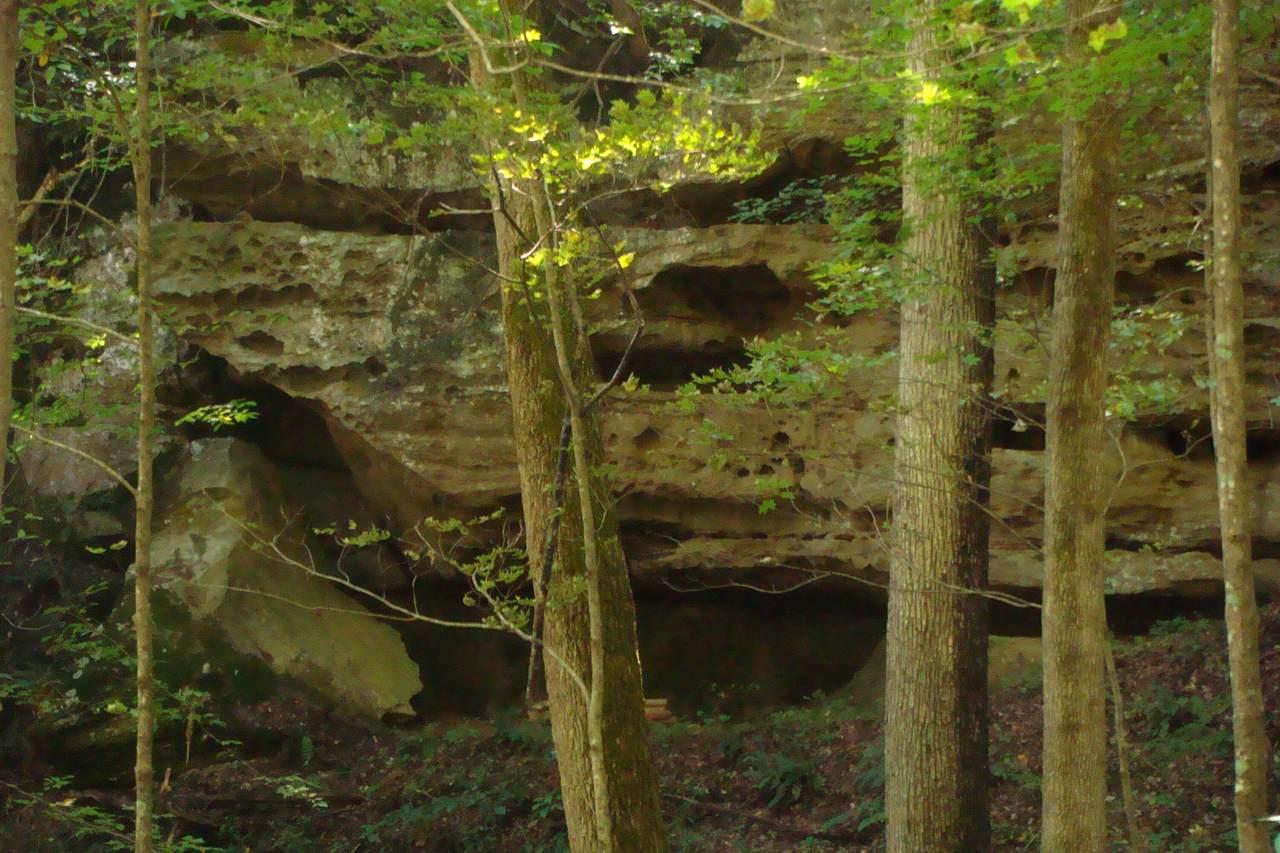 1 Brushy Fork Bird Ridge - Photo 1