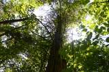 99999 Noland Creek - Photo 18
