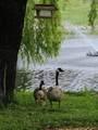 433 Deer Lake Place - Photo 42