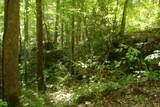 1 Brushy Fork Bird Ridge - Photo 6