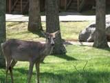 28-4 Woodson Bend Resort - Photo 29