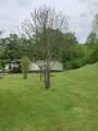 398 Dove Tree Lane - Photo 5