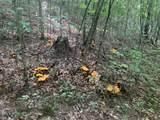 1590 Mushroom Road - Photo 16