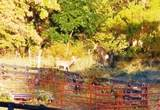 840 Copper Creek Rd - Photo 5