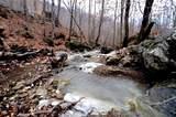338 Cow Creek - Photo 3