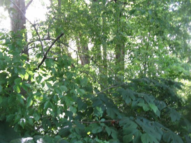 1 Flat Creek Rd, Big Creek, KY 40914 (MLS #1913667) :: Nick Ratliff Realty Team