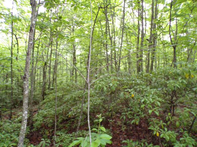 4200B Forest Service Rd B, London, KY 40741 (MLS #20110321) :: Nick Ratliff Realty Team