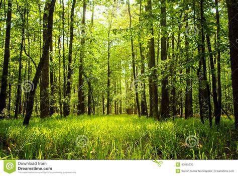 999 Goslin Branch - Photo 1