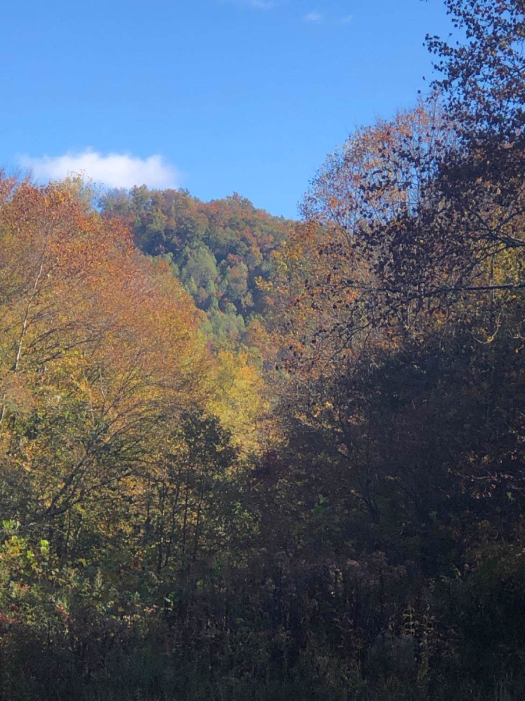 9999 Little Beech Creek Road - Photo 1