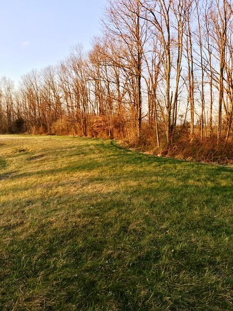 127 Elk Drive, Stamping Ground, KY 40379 (MLS #1619634) :: The Lane Team