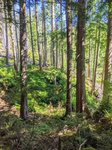 Lot 498 Spruce Burl Ln, Lincoln City, OR 97367 (MLS #20-1626) :: Coho Realty