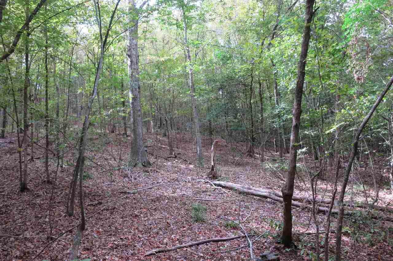 55.7 Acs Big Wood Rd - Photo 1
