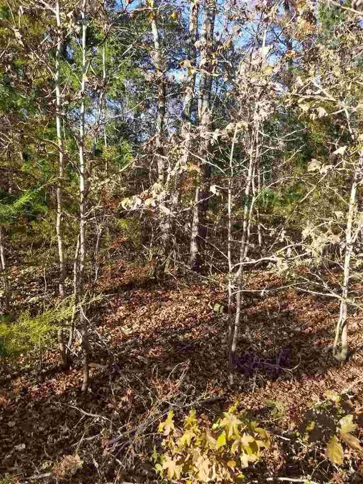 22532 Dogwood Trail - Photo 1