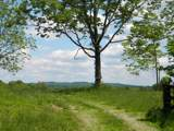 1637 Old Seven Mile Pike - Photo 20