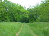 1637 Old Seven Mile Pike - Photo 44