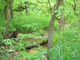 1637 Old Seven Mile Pike - Photo 49