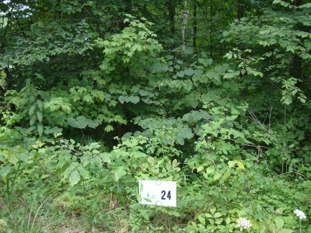 lot 114 Gannaway Rd, Leitchfield, KY 42754 (#1529583) :: The Price Group