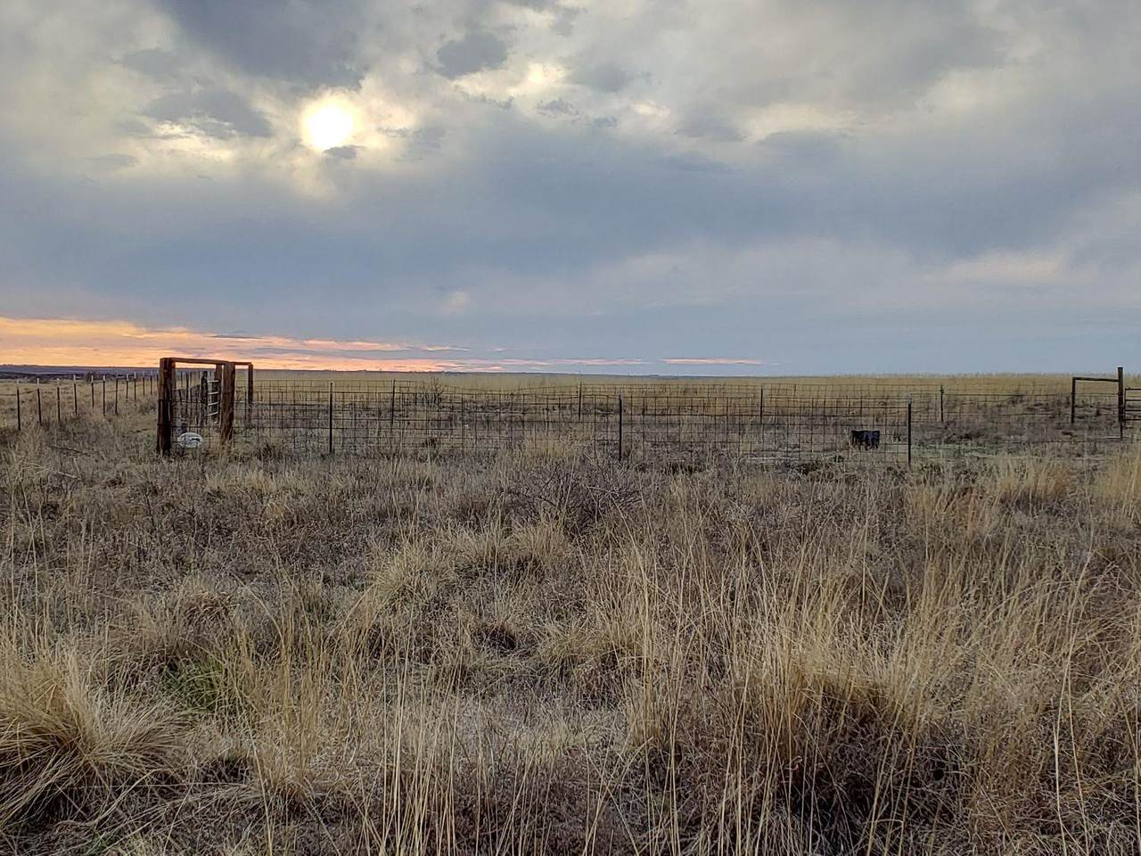 0 Farm Road 1490 - Photo 1