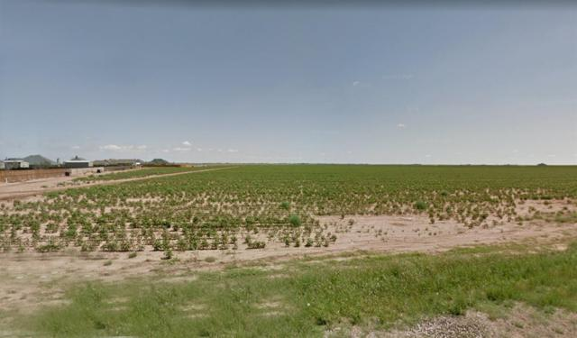 17013 Farm Road 1730, Lubbock, TX 79424 (MLS #201903787) :: Stacey Rogers Real Estate Group at Keller Williams Realty