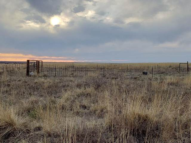 0 Farm Road 1490, Littlefield, TX 79339 (MLS #202002419) :: Lyons Realty
