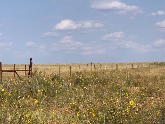 0-320 AC County Road 430, Brownfield, TX 79316 (MLS #202009116) :: Duncan Realty Group
