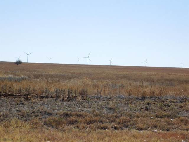 1 County Road 217, Muleshoe, TX 79347 (MLS #202010639) :: Rafter Cross Realty
