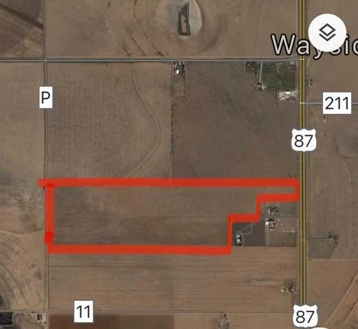 0 County Road P, Tahoka, TX 79373 (MLS #202103905) :: McDougal Realtors