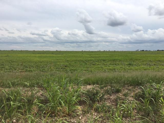 0-Lot 3 County Road 5300, New Deal, TX 79350 (MLS #201807635) :: Lyons Realty