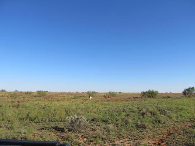 0 Farm Road 193, Dickens, TX  (MLS #201809267) :: Lyons Realty