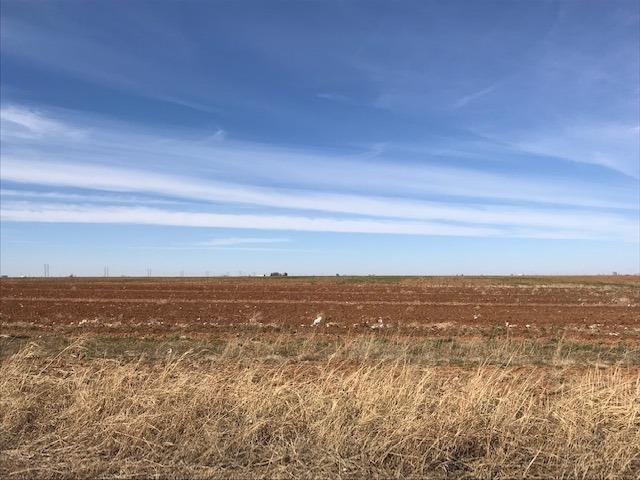 1822 Farm Road 1729, Lubbock, TX 79403 (MLS #201901569) :: Lyons Realty