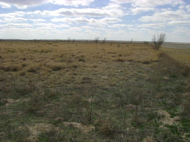 0 Farm Road 1490, Littlefield, TX 79339 (MLS #201404932) :: Lyons Realty