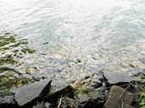 146 Lake Shore Dr - Photo 3