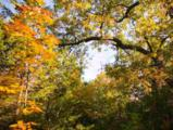 L28 Arbor Ridge Way - Photo 17