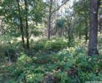 L209 Timber Tr - Photo 10