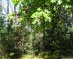 L209 Timber Tr - Photo 19