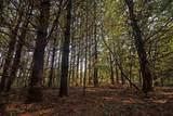 L2 White Pine Way - Photo 14