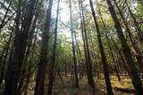 L2 White Pine Way - Photo 20