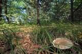 L2 White Pine Way - Photo 8
