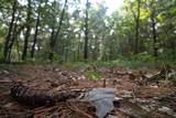 L2 White Pine Way - Photo 9