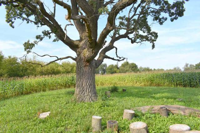 L31 Ox Trail Way, Middleton, WI 53593 (#1821756) :: Nicole Charles & Associates, Inc.