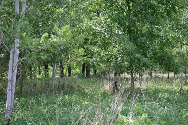 60 Ac County Road C, Colburn, WI 53943 (#1832431) :: Nicole Charles & Associates, Inc.