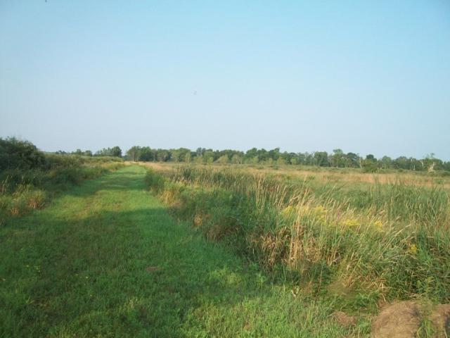 Marsh Rd, Royalton, WI 54961 (#1839431) :: Nicole Charles & Associates, Inc.