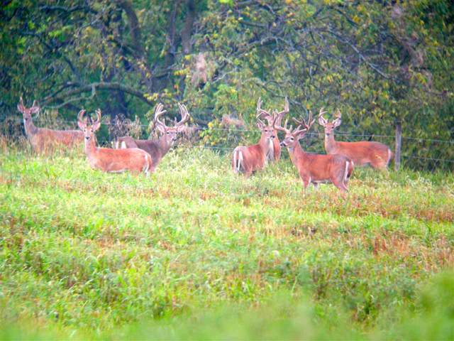 900 Ac County Road Q, Dodgeville, WI 53533 (#1868542) :: HomeTeam4u