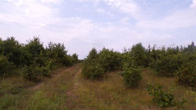 Lot #3 CSM10757 Blue Ridge Ln, Saratoga, WI 54457 (#1891847) :: HomeTeam4u