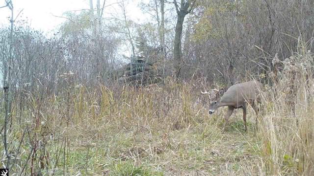 33.4 Ac Oak Mound Rd, Alto, WI 53919 (#1819867) :: HomeTeam4u