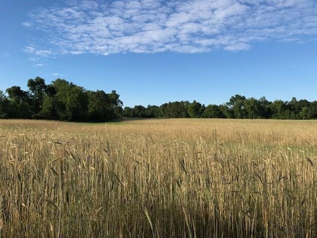 83 acres County Road Hh, Marion, WI 53948 (#1811192) :: HomeTeam4u