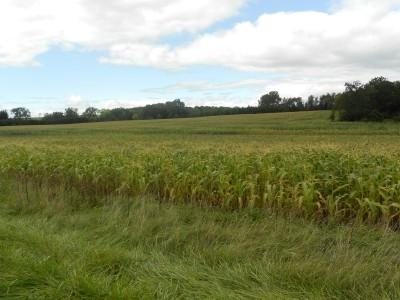 64.83 Ac County Road Pp - Photo 1