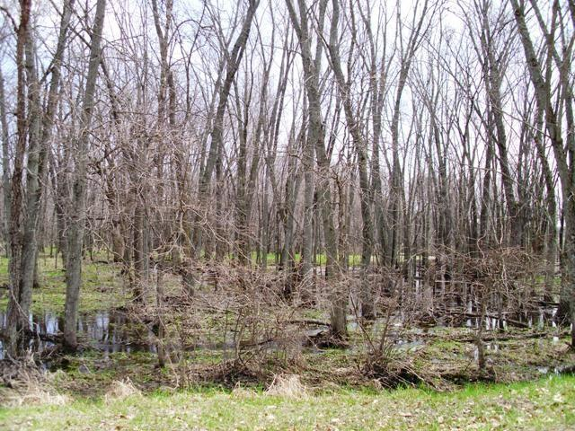 3.55 Ac County Road O, Grant, WI 54666 (#1826013) :: Nicole Charles & Associates, Inc.
